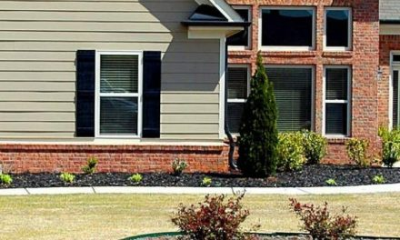 Tips to Help You Take Better Care of Your Yard