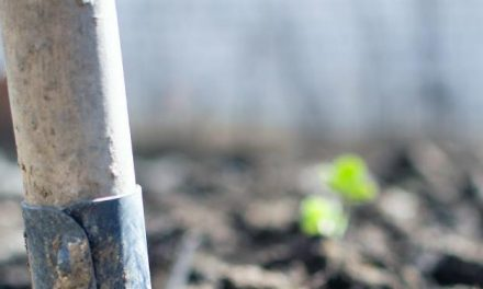 The Ultimate Guide to Get Started with Garden Care